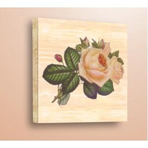 Акварелна роза